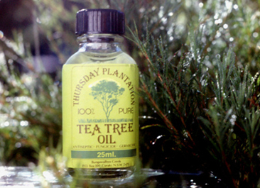 历史悠久的茶树油